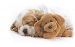 Sleeping puppy with dog stuffed animal