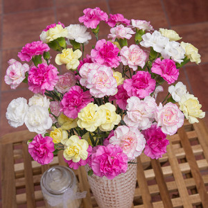 Pink, white & yellow Mother's Day carnation bouquet